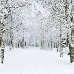 Learning about Seasonal Affective Disorder, its history and how to handle it