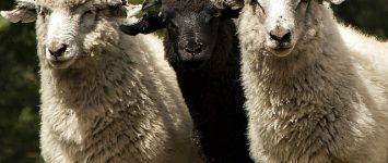 Embrace the family 'black sheep' this holiday