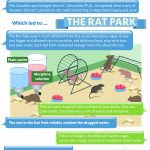 inforgraphic The Rat Park: A new way to look at what promotes drug addiction