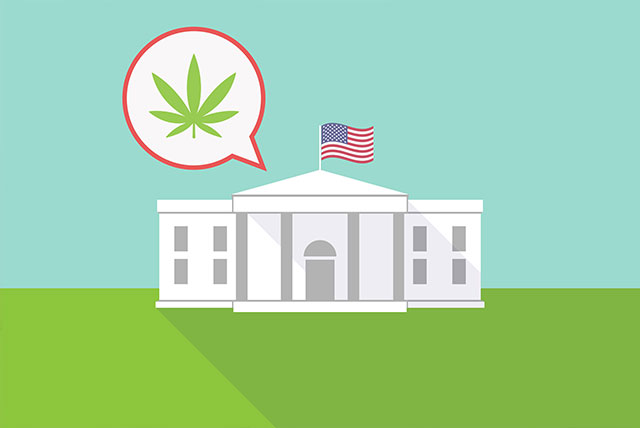 White House official's son found to make big investments in marijuana industry