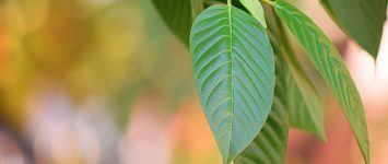 FDA adds kratom to list of illegal substances