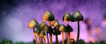 Magic mushrooms have potential to cure depression, claims study